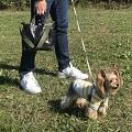 \ワンちゃんとのお散歩をもっと楽しく!/ 愛犬とのお散歩専用トート