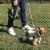 ワンちゃんと飼い主さんの楽しい時間をサポート!愛犬とのお散歩専用トート:多数メディアで紹介されています