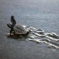 まずは楽しい活動から!浜松・遠州灘の〈海洋ごみゼロプロジェクト〉